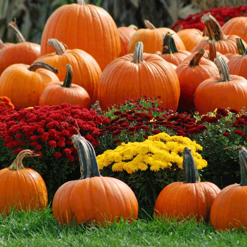 10 New Fall Wallpaper With Pumpkins FULL HD 1920×1080 For PC Background 2020 free download pumpkin patch wallpaper background images hd wallpapers sharovarka 800x800