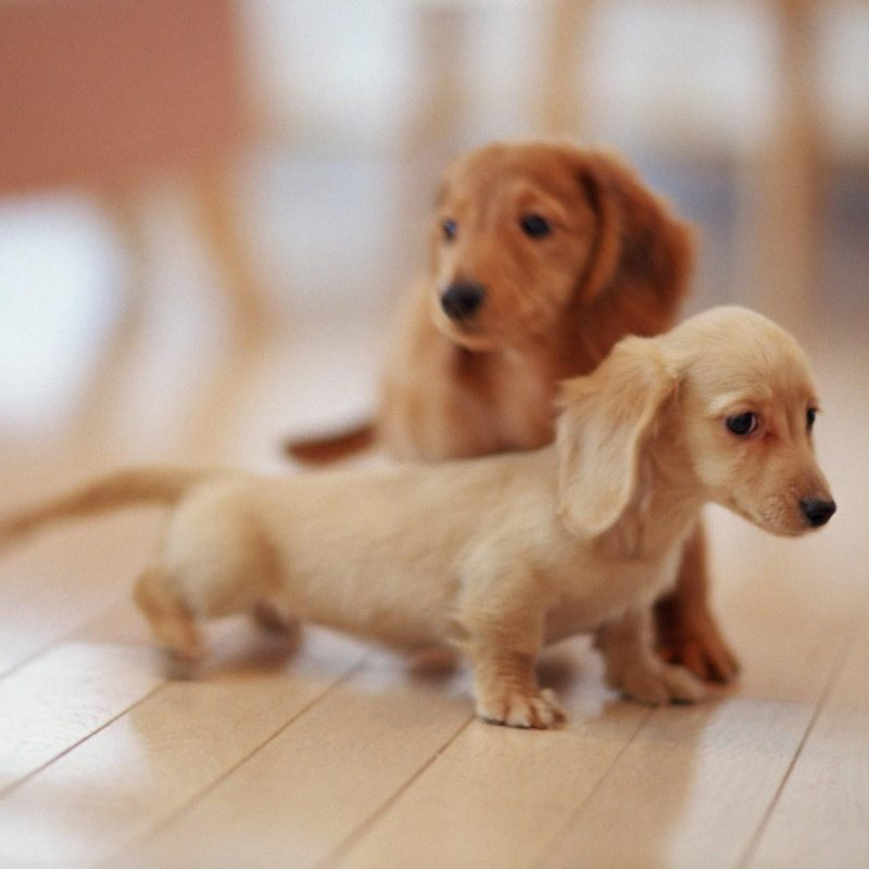 10 Best Dogs And Puppies Wallpaper FULL HD 1080p For PC Background 2018 free download puppies and dogs pics wallpaper 800x800