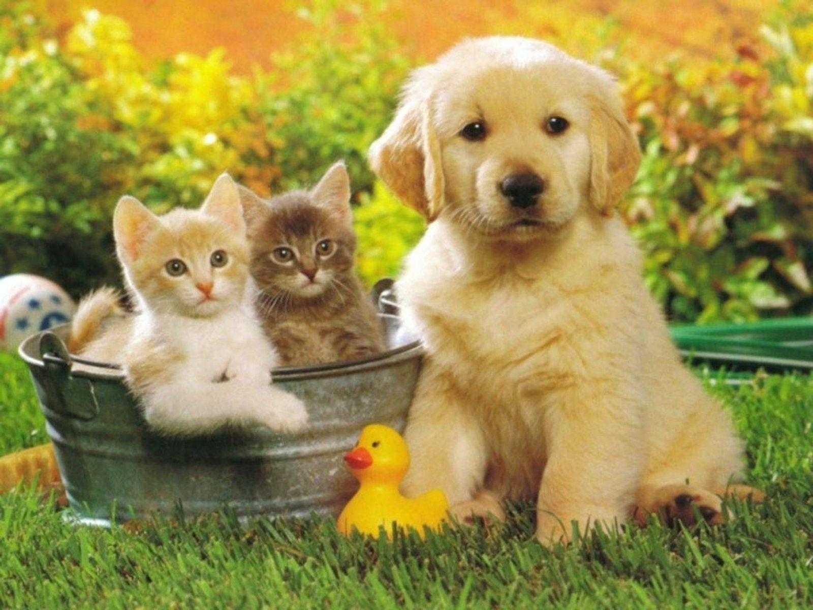 10 Top Puppy And Kitten Wallpaper FULL HD 1920×1080 For PC Background