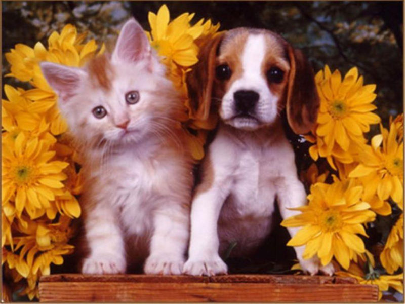 10 Most Popular Puppy And Kitten Wallpapers FULL HD 1920×1080 For PC Background 2020 free download puppies and kittens wallpapers wallpaper cave 13 800x600