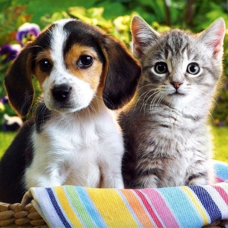 10 New Kitten And Puppies Wallpaper FULL HD 1080p For PC Desktop 2021 free download puppies and kittens wallpapers wallpaper cave best games 1 800x800