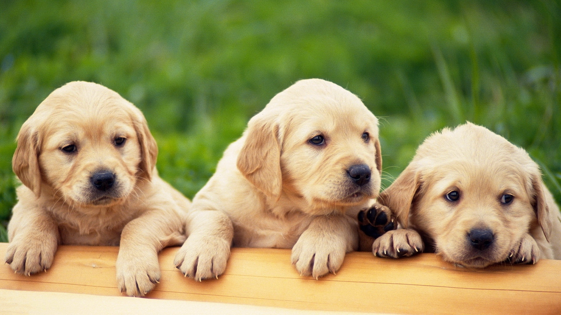puppies | free hd top most downloaded wallpapers - page 12