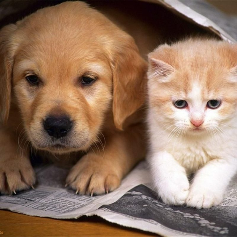 10 Latest Cute Puppy And Kitten Pics FULL HD 1080p For PC Desktop 2018 free download puppies kitten love cat cute friends love puppy together 800x800