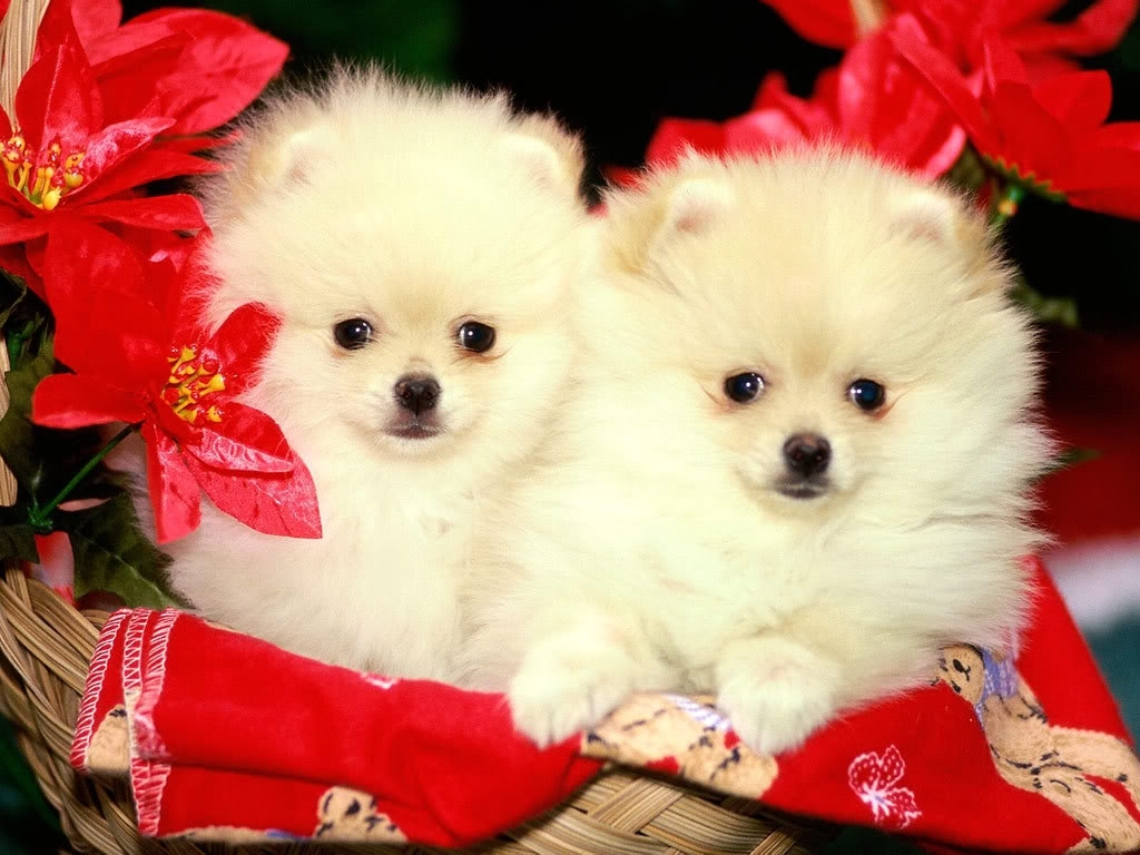 puppies wallpapers free download group (81+)