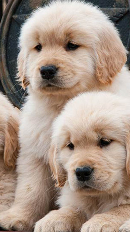 10 Latest 3D Puppy Wallpaper FULL HD 1920×1080 For PC Background 2018 free download puppy iphone wallpaper 2019 3d iphone wallpaper 450x800