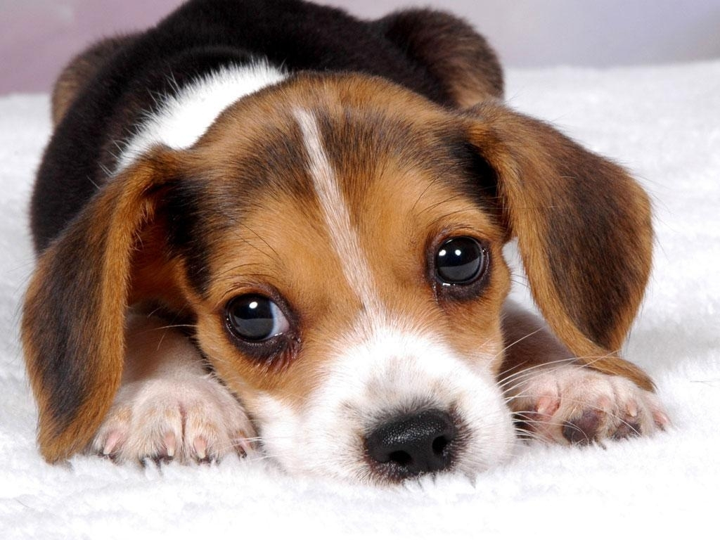 puppy wallpapers free group (83+)