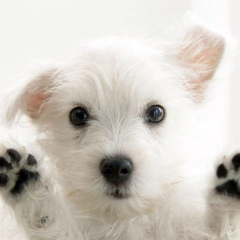 10 Latest Puppy Wallpapers For Free FULL HD 1920×1080 For PC Desktop 2018 free download puppy wallpapers free wallpaper cave 2 800x800