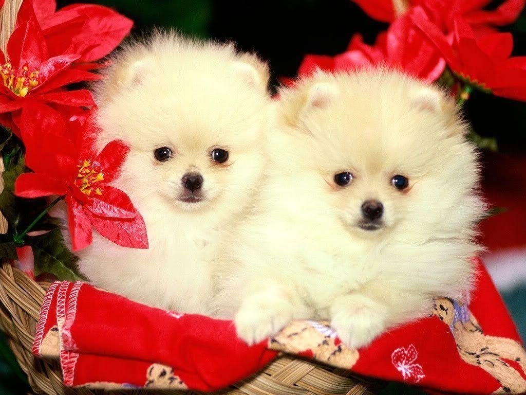 10 top puppies wallpapers free download full hd 1080p for pc