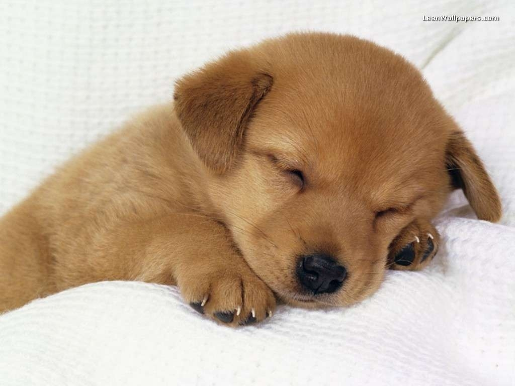 puppy wallpapers free - wallpaper cave