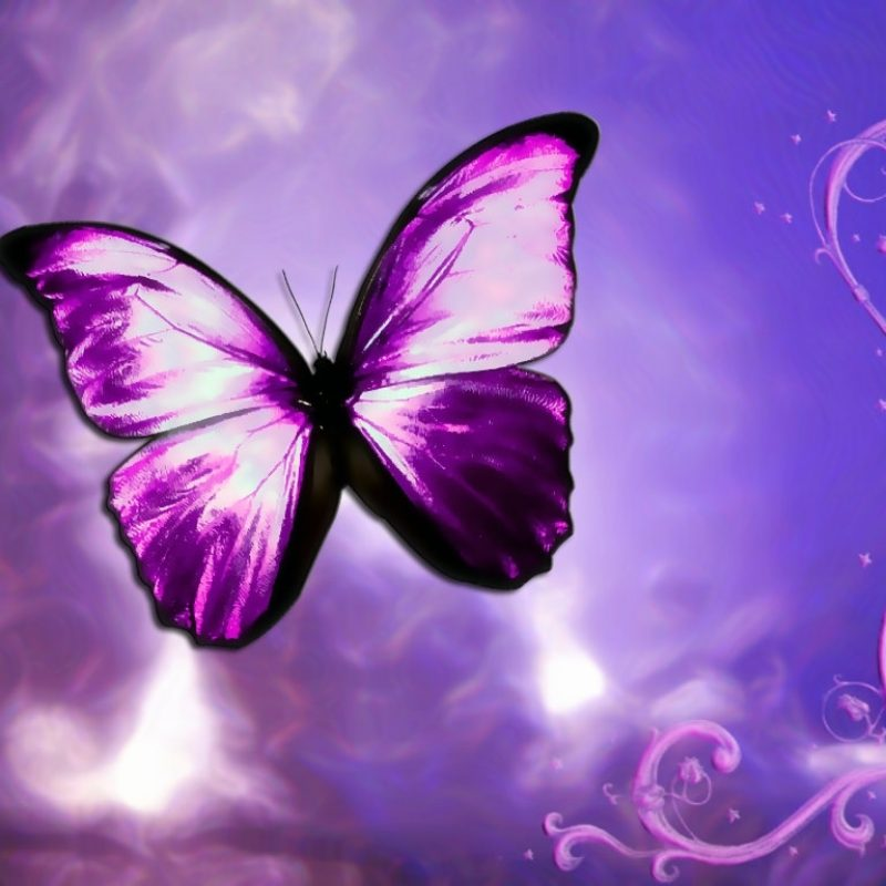 10 New Purple Butterfly Background Images FULL HD 1920×1080 For PC Desktop 2018 free download purple butterfly background images 5 background check all 800x800