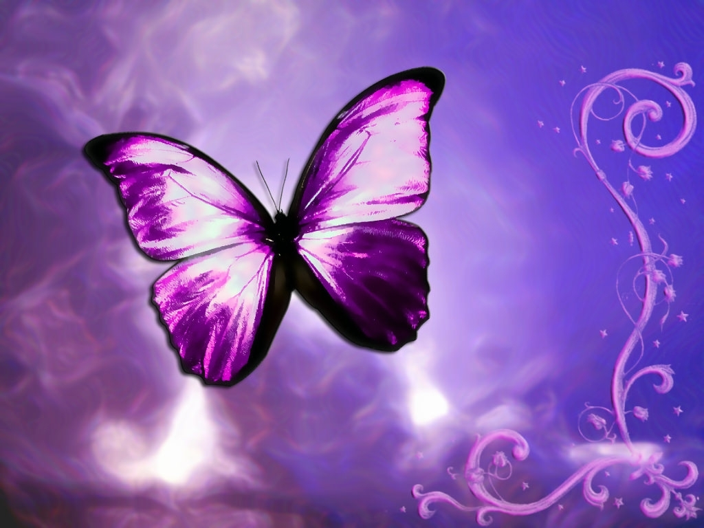 purple butterfly background images 5 | background check all