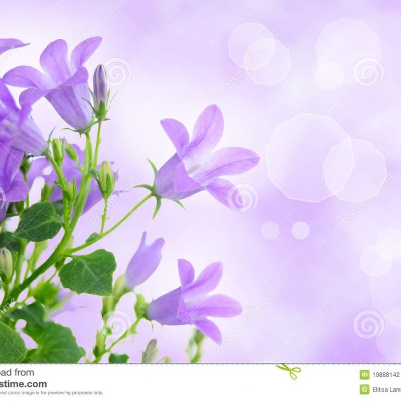 10 Most Popular Light Purple Flower Background FULL HD 1920×1080 For PC Desktop 2018 free download purple flower background stock photo image of foliage 19888142 800x800