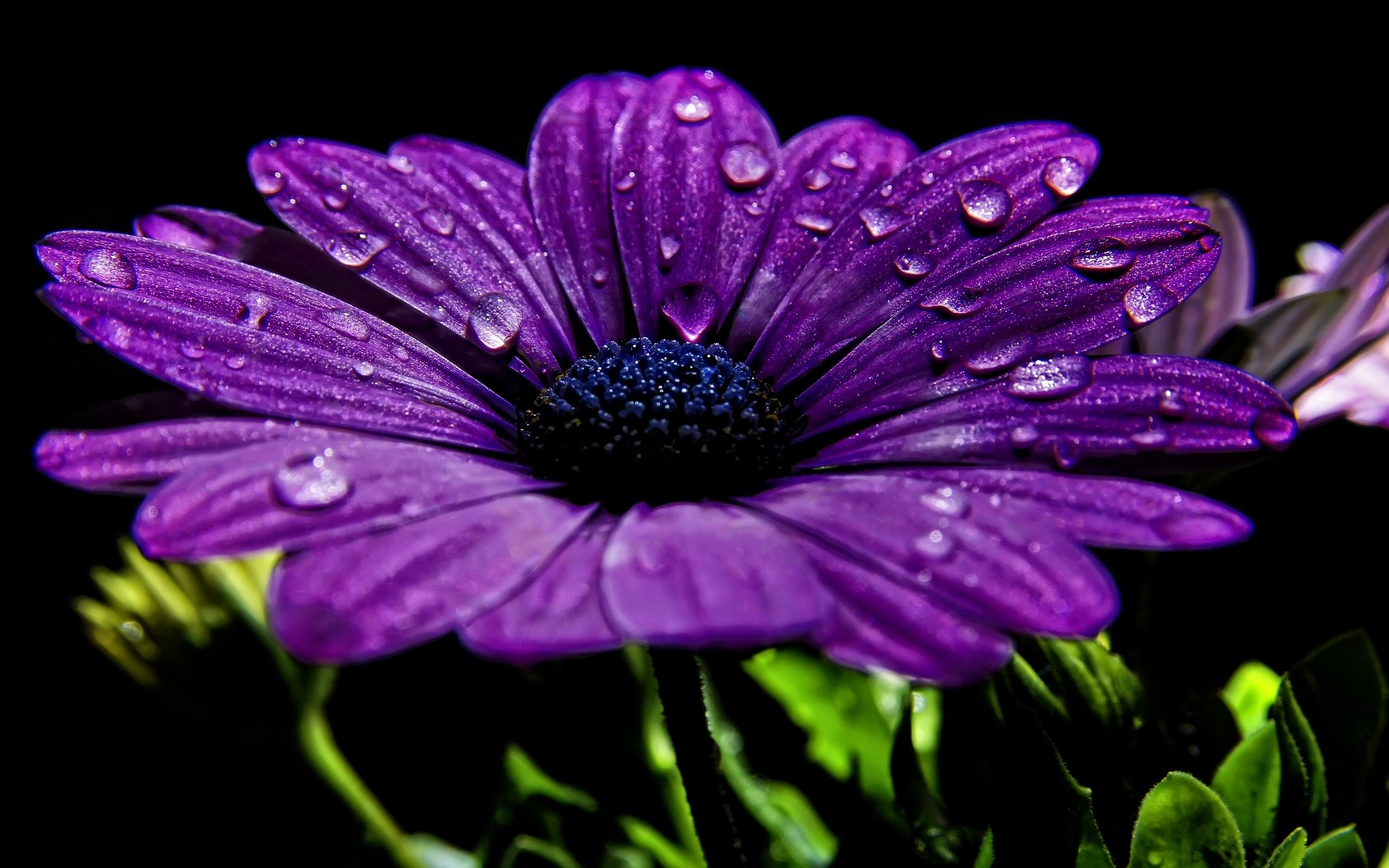 purple flowers 14034 2560x1600 px ~ hdwallsource