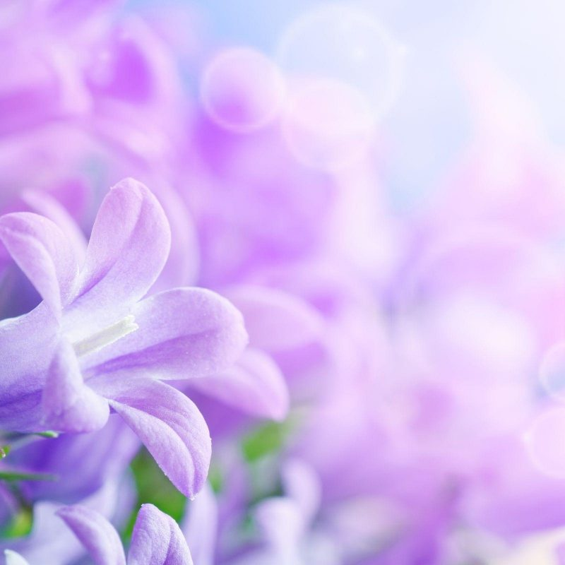10 Most Popular Light Purple Flower Background FULL HD 1920×1080 For PC Desktop 2018 free download purple flowers backgrounds wallpaper cave 800x800