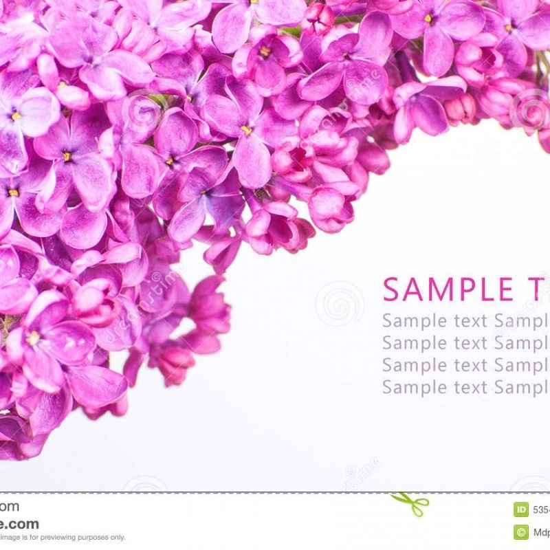 10 Most Popular Purple Flowers White Background FULL HD 1080p For PC Desktop 2018 free download purple flowers on white background with sample text stock image 800x800
