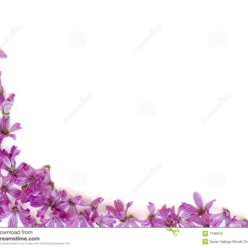 10 Most Popular Purple Flowers White Background FULL HD 1080p For PC Desktop 2018 free download purple flowers white background 14 background check all 800x800