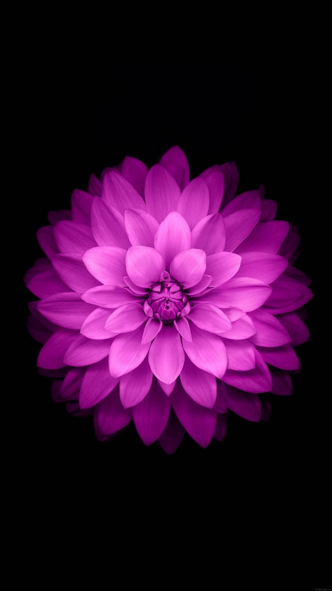 purple lotus black background   htc one wallpaper   pinterest
