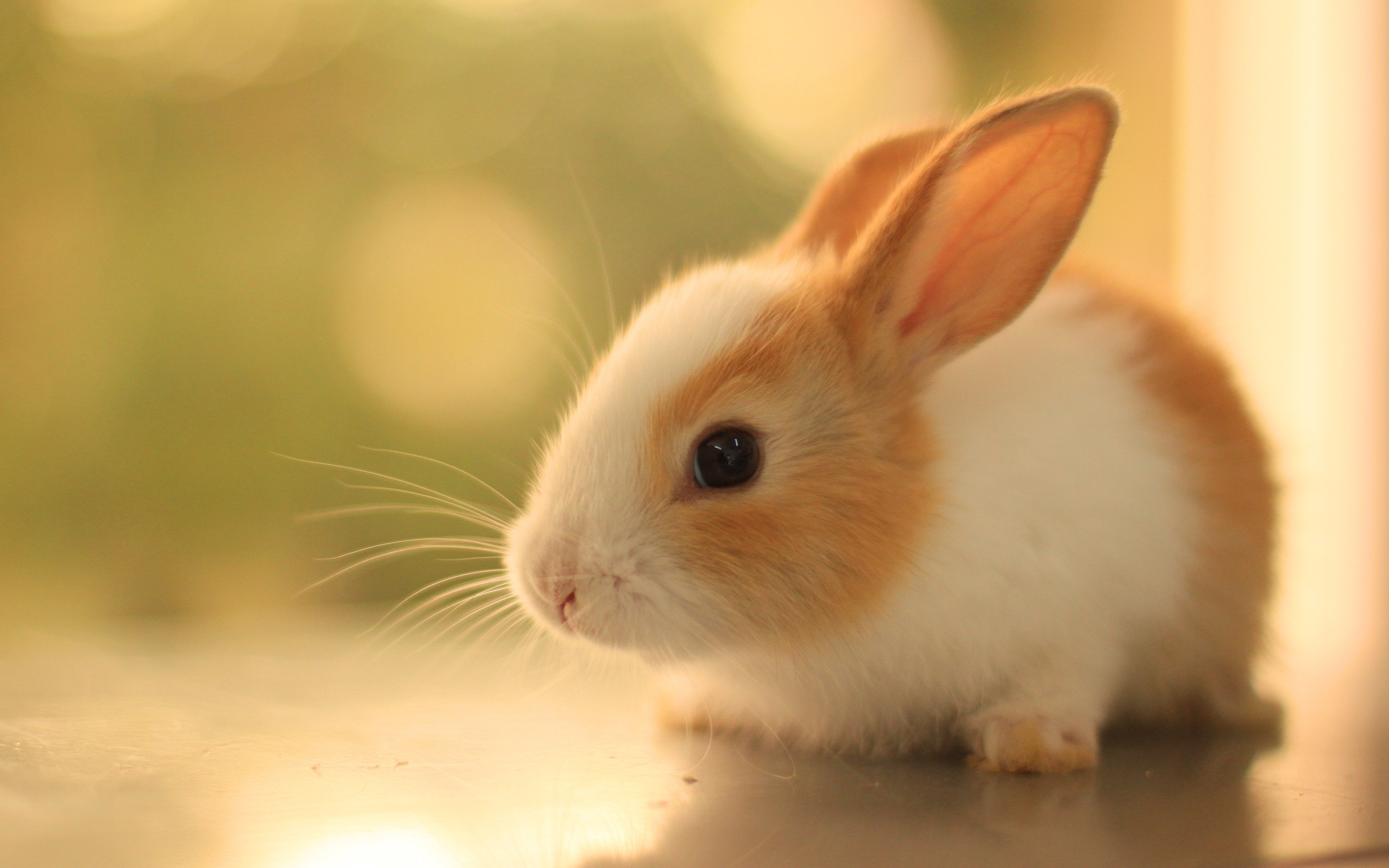 rabbits images bunnies hd wallpaper and background photos (40609229)