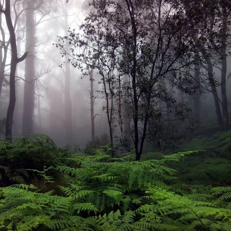 10 Top Hd Rain Forest Wallpaper FULL HD 1080p For PC Desktop 2018 free download rain forest nature wallpaper hd wallpaper wallpaperlepi 800x800