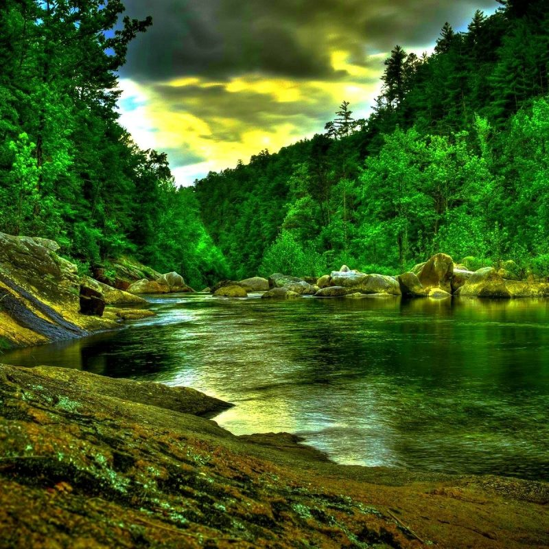 10 Top Hd Rain Forest Wallpaper FULL HD 1080p For PC Desktop 2018 free download rain forest wallpaper of smartphone hd pics gipsypixel 800x800