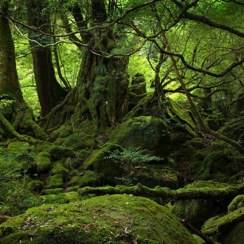 10 Top Hd Rain Forest Wallpaper FULL HD 1080p For PC Desktop 2018 free download rainforest e29da4 4k hd desktop wallpaper for 4k ultra hd tv e280a2 dual 800x800