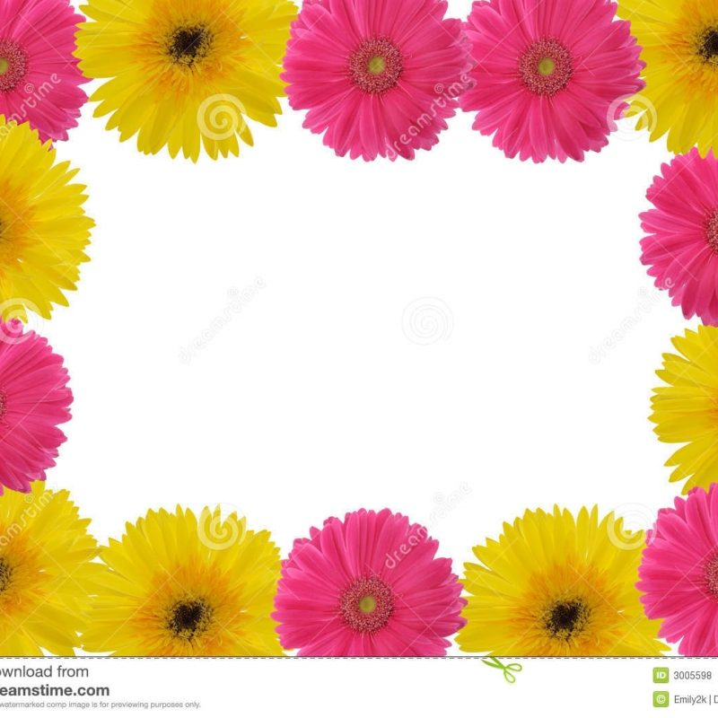 10 Most Popular Pictures Of Gerber Daisies FULL HD 1920×1080 For PC Desktop 2020 free download red and yellow gerber daisy stock photo image of border petal 800x800