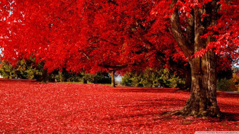 10 Top Autumn Hd Wallpaper 1080P FULL HD 1080p For PC Desktop 2020 free download red autumn e29da4 4k hd desktop wallpaper for 4k ultra hd tv e280a2 wide 800x450