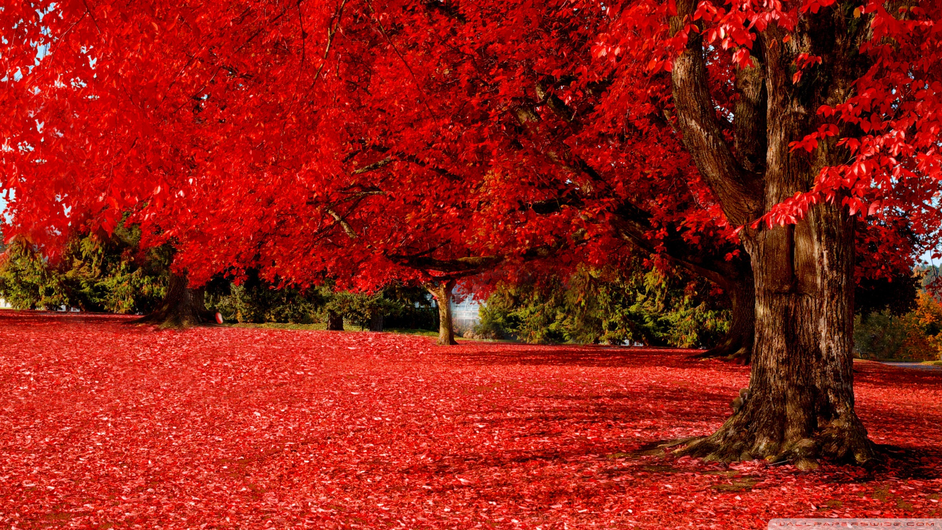 red autumn ❤ 4k hd desktop wallpaper for 4k ultra hd tv • wide