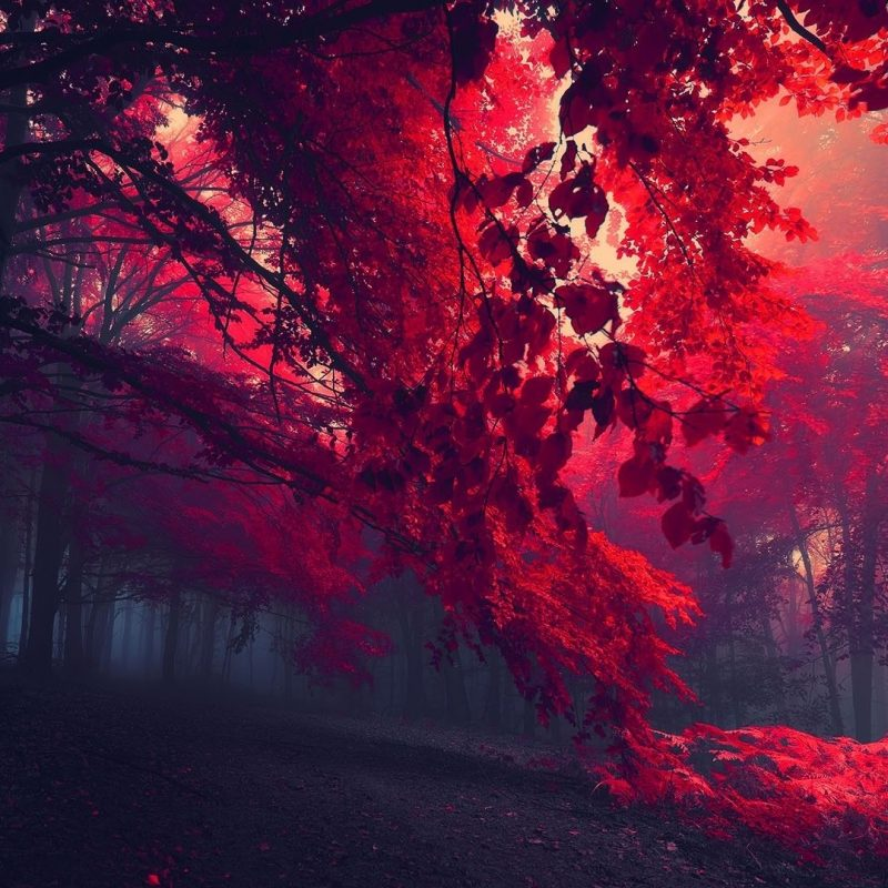 10 Latest Wallpapers Hd 1920 X 1080 FULL HD 1080p For PC Background 2020 free download red forest trees hd wallpaper fullhdwpp full hd wallpapers 1920x1080 800x800