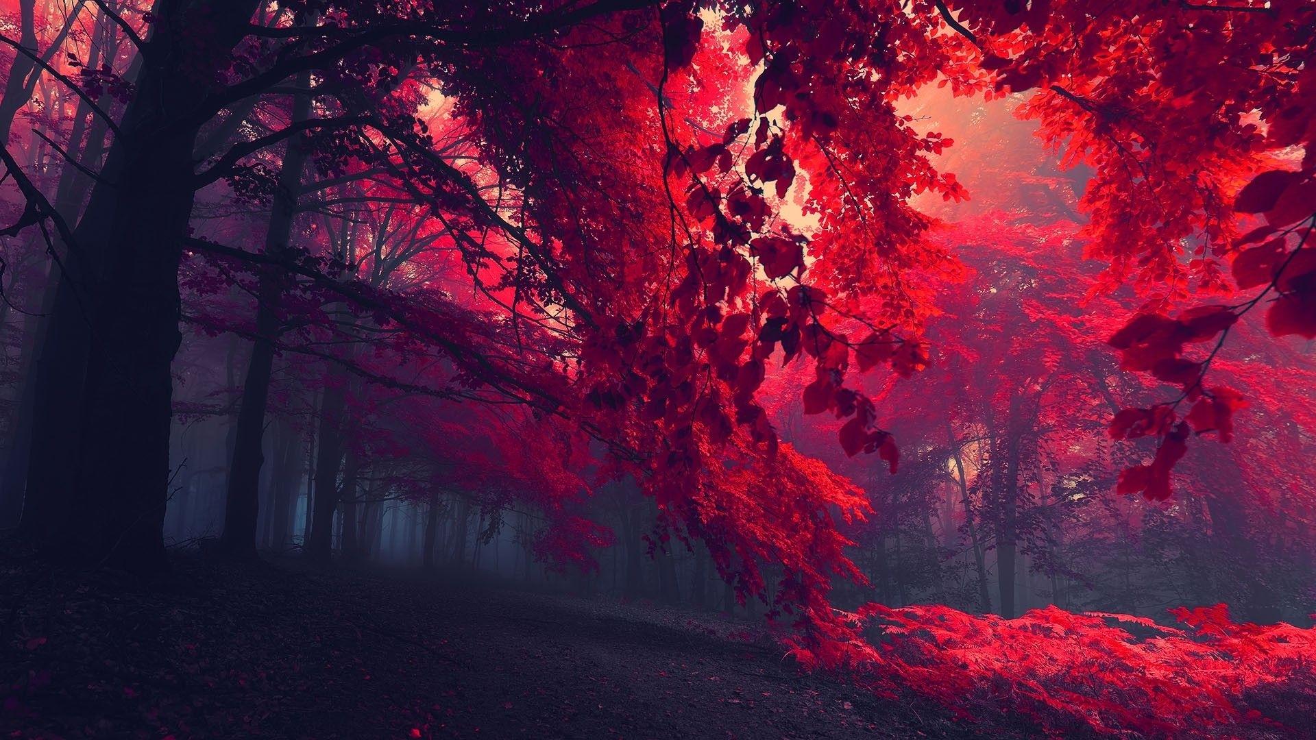 red forest trees hd wallpaper » fullhdwpp - full hd wallpapers 1920x1080