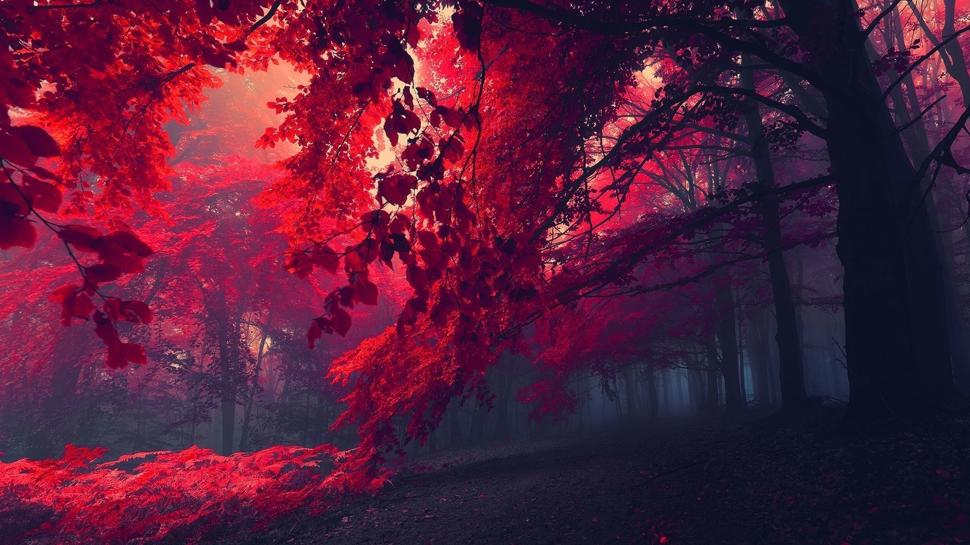 red nature wallpaper (65+ images)