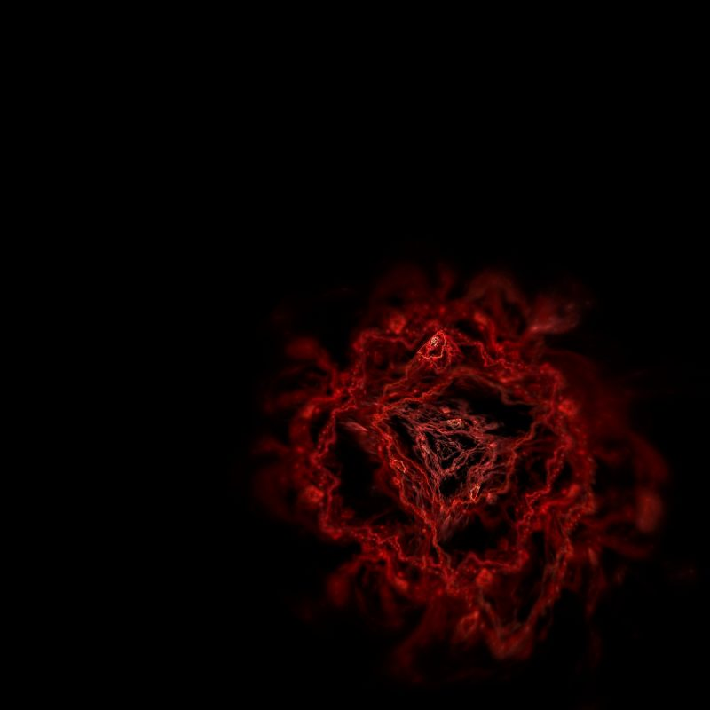 10 Best Red Roses With Black Background FULL HD 1080p For PC Desktop 2018 free download red rose black background wallpaper google search random 800x800