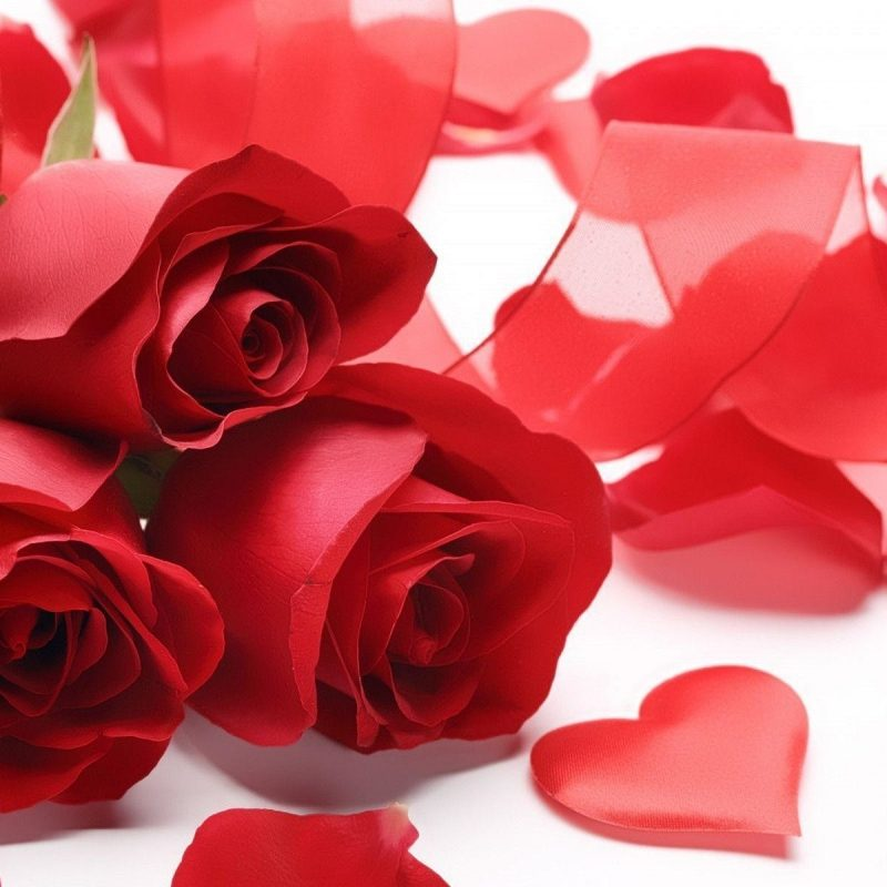 10 Top Roses And Hearts Wallpaper FULL HD 1920×1080 For PC Background 2018 free download red rose heart wallpaper 53 images 800x800