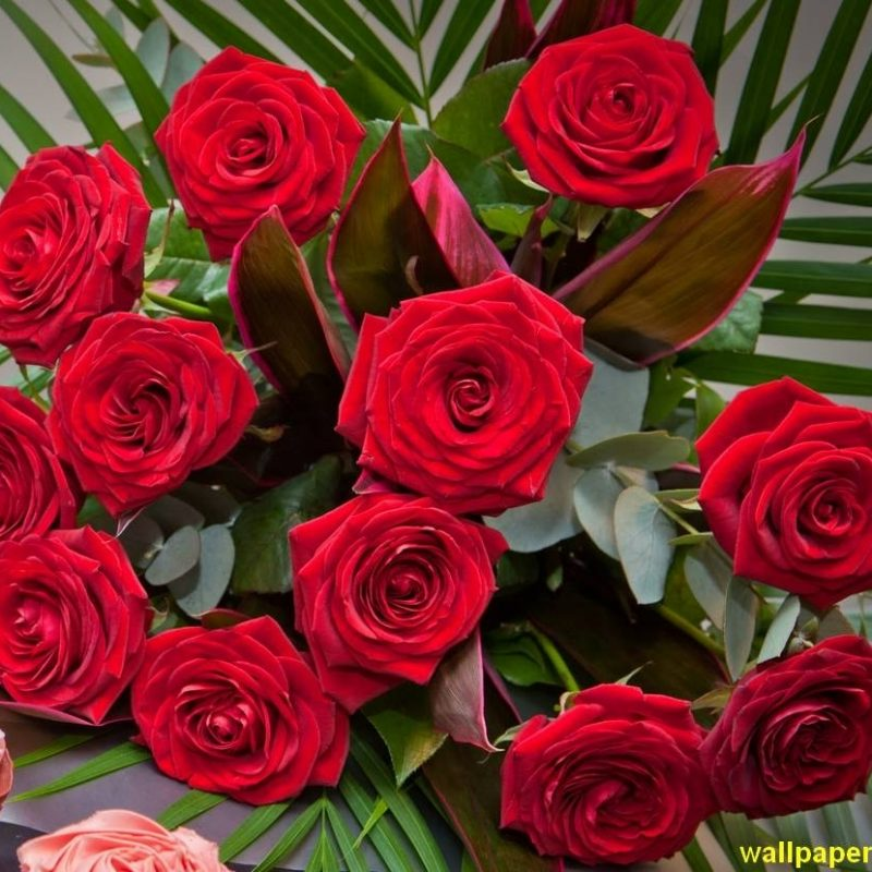 10 New Rose Wallpapers Free Download FULL HD 1920×1080 For PC Background 2018 free download red rose images free download stock flower images pinterest 800x800