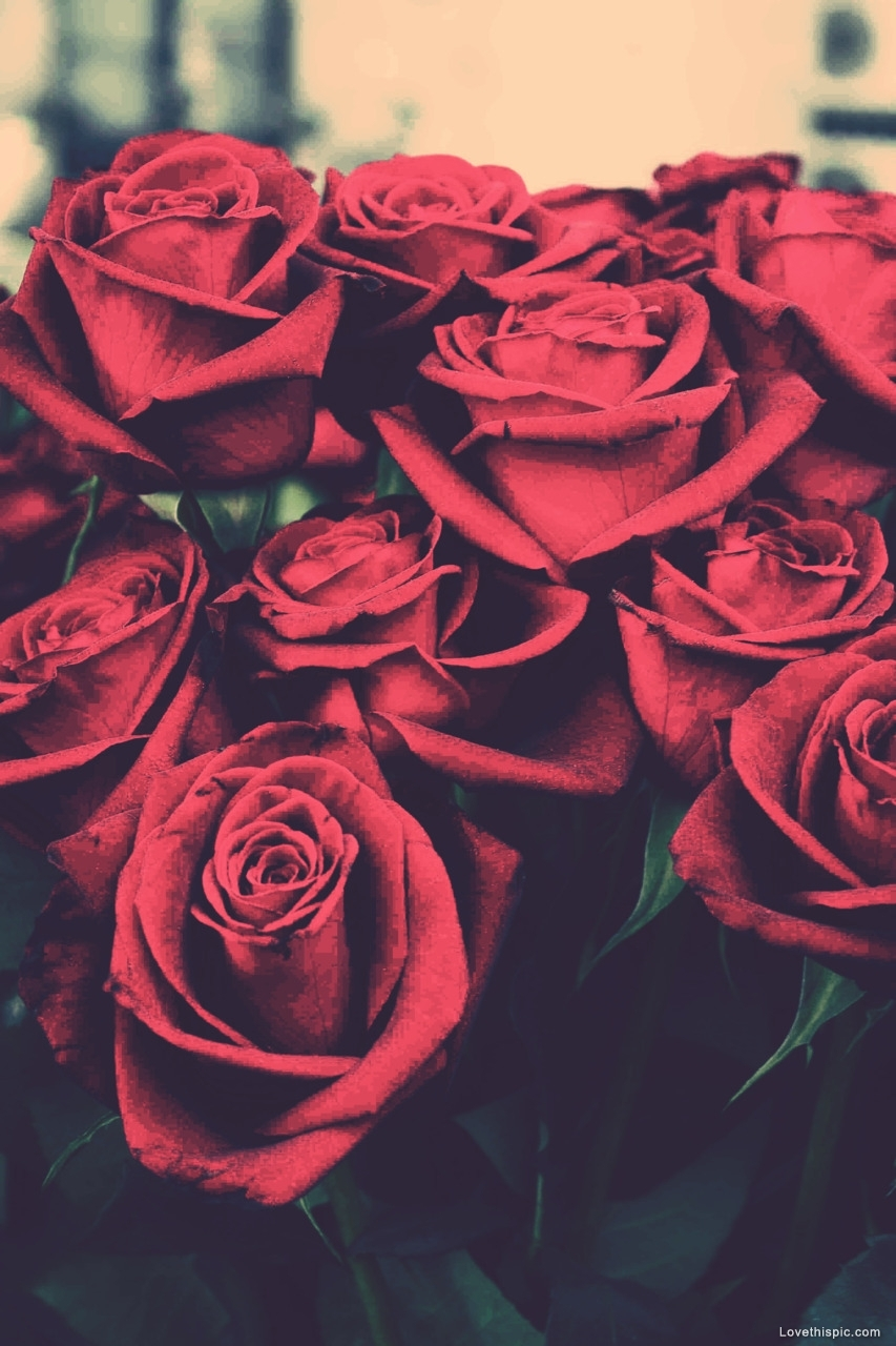red roses pictures, photos, and images for facebook, tumblr