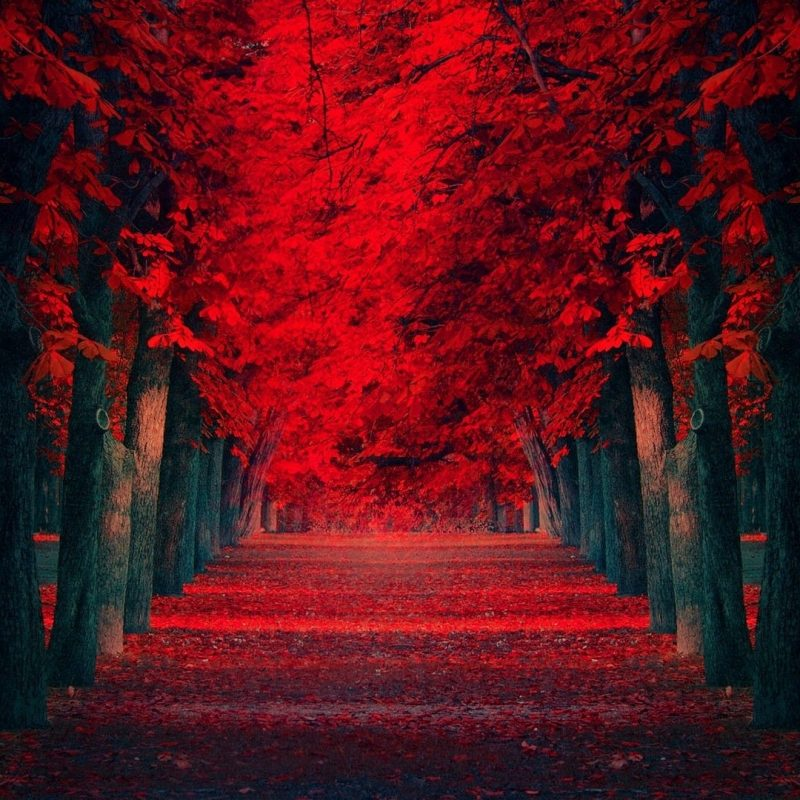 10 Most Popular Red Wallpaper Full Hd FULL HD 1920×1080 For PC Desktop 2018 free download red trees pathway hd wallpaper fullhdwpp full hd wallpapers 800x800