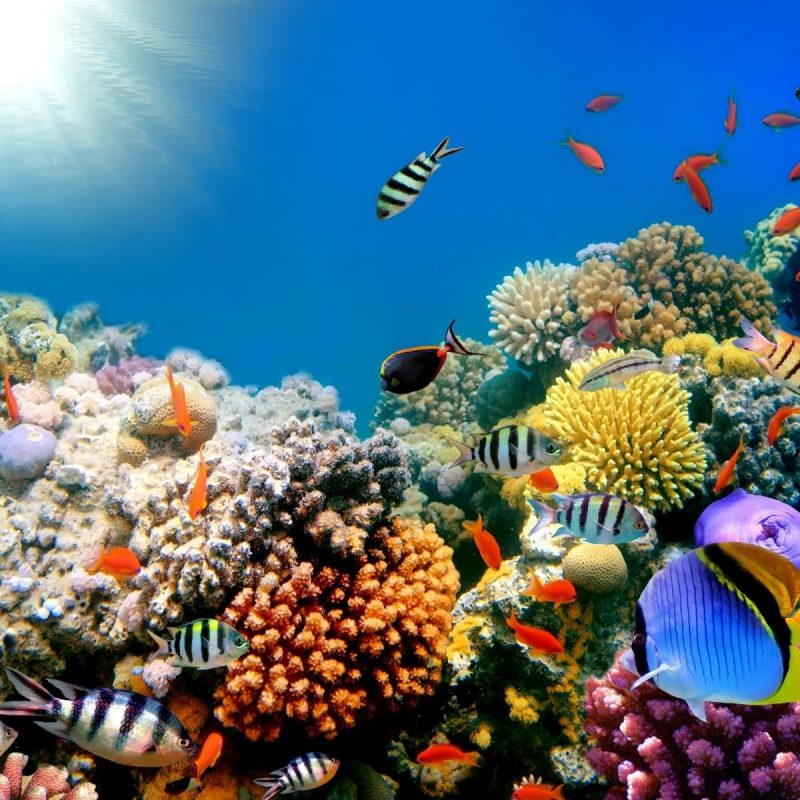 10 Latest High Res Underwater Photos FULL HD 1920×1080 For PC Background 2021 free download reef ocean sea underwater high resolution hd desktop wallpaper 800x800