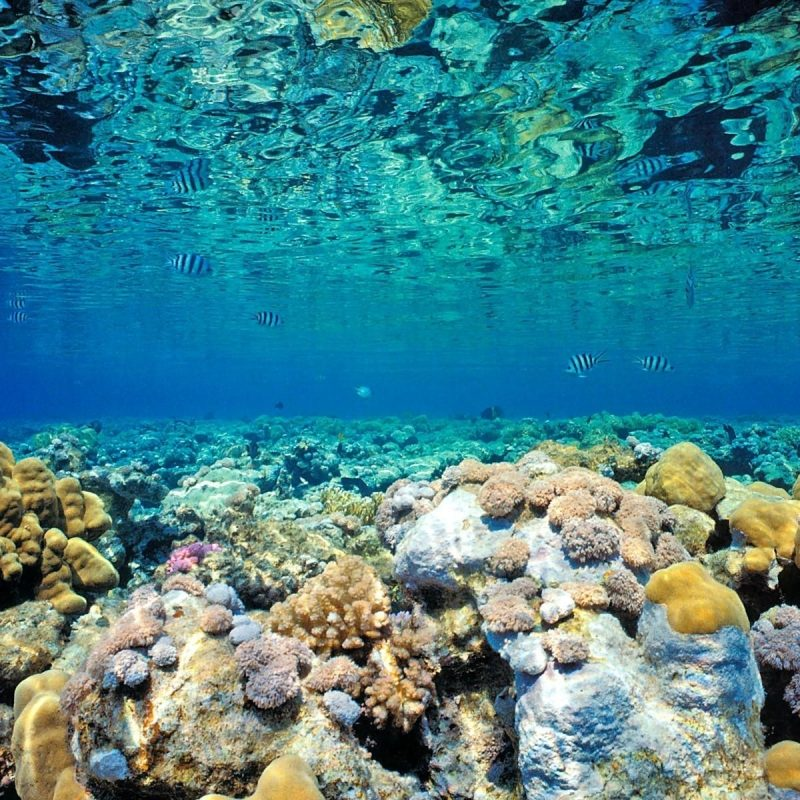 10 Most Popular Coral Reef Wallpaper Widescreen Hd FULL HD 1080p For PC Background 2021 free download reef wallpaper hd resolution mzx earth pinterest wallpaper 800x800