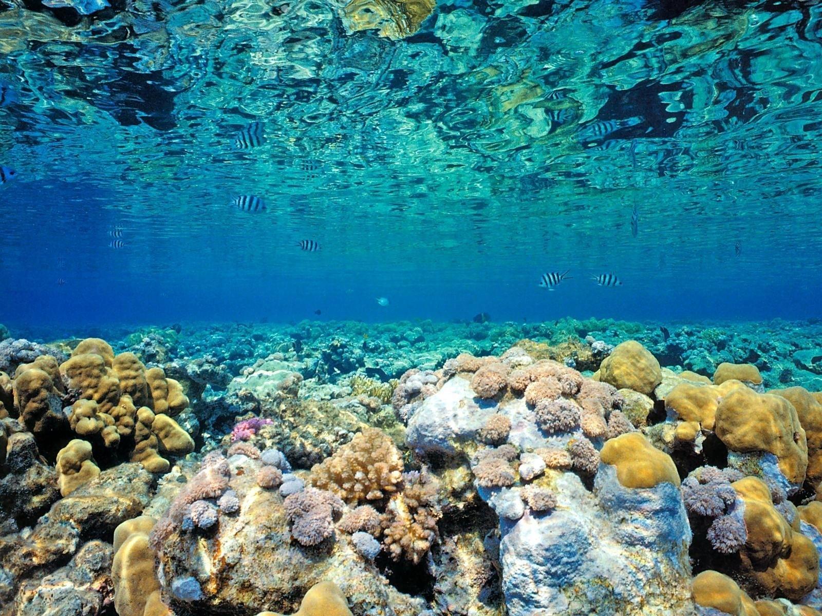 reef wallpaper hd resolution #mzx | earth | pinterest | wallpaper