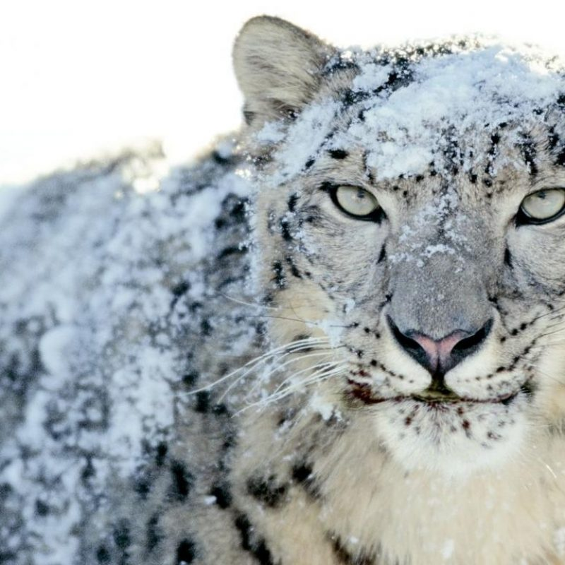 mac snow leopard free download