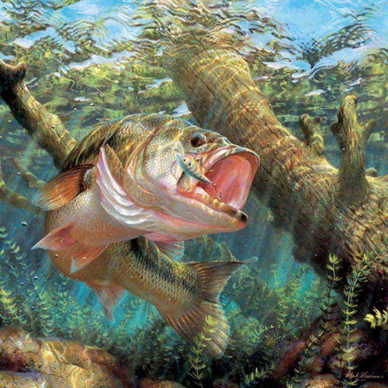 10 Most Popular Bass Fishing Screen Saver FULL HD 1920×1080 For PC Background 2021 free download resultado de imagem para fish wallpaper fishing pinterest fish 1 800x800