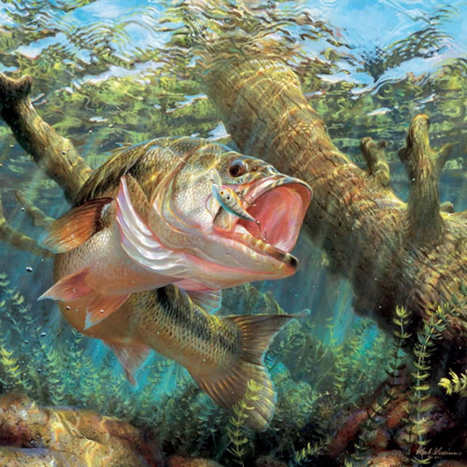 resultado de imagem para fish wallpaper | fishing | pinterest | fish