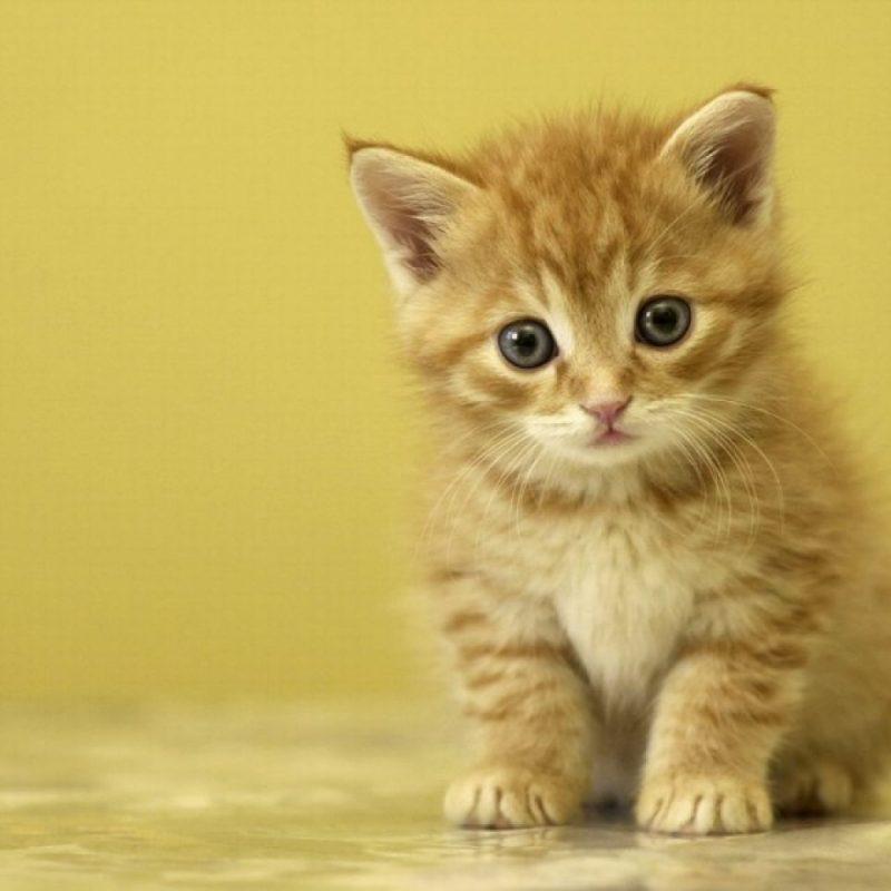 10 New Cute Baby Kitten Pics FULL HD 1920×1080 For PC Background 2018 free download resultado de imagen para gatitos bebes tiernos poemas tiernitos 800x800