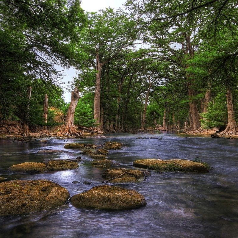10 New Texas Hill Country Wallpaper FULL HD 1080p For PC Desktop 2020 free download river guadalupe river texas hill country forest trunks rocks usa 800x800