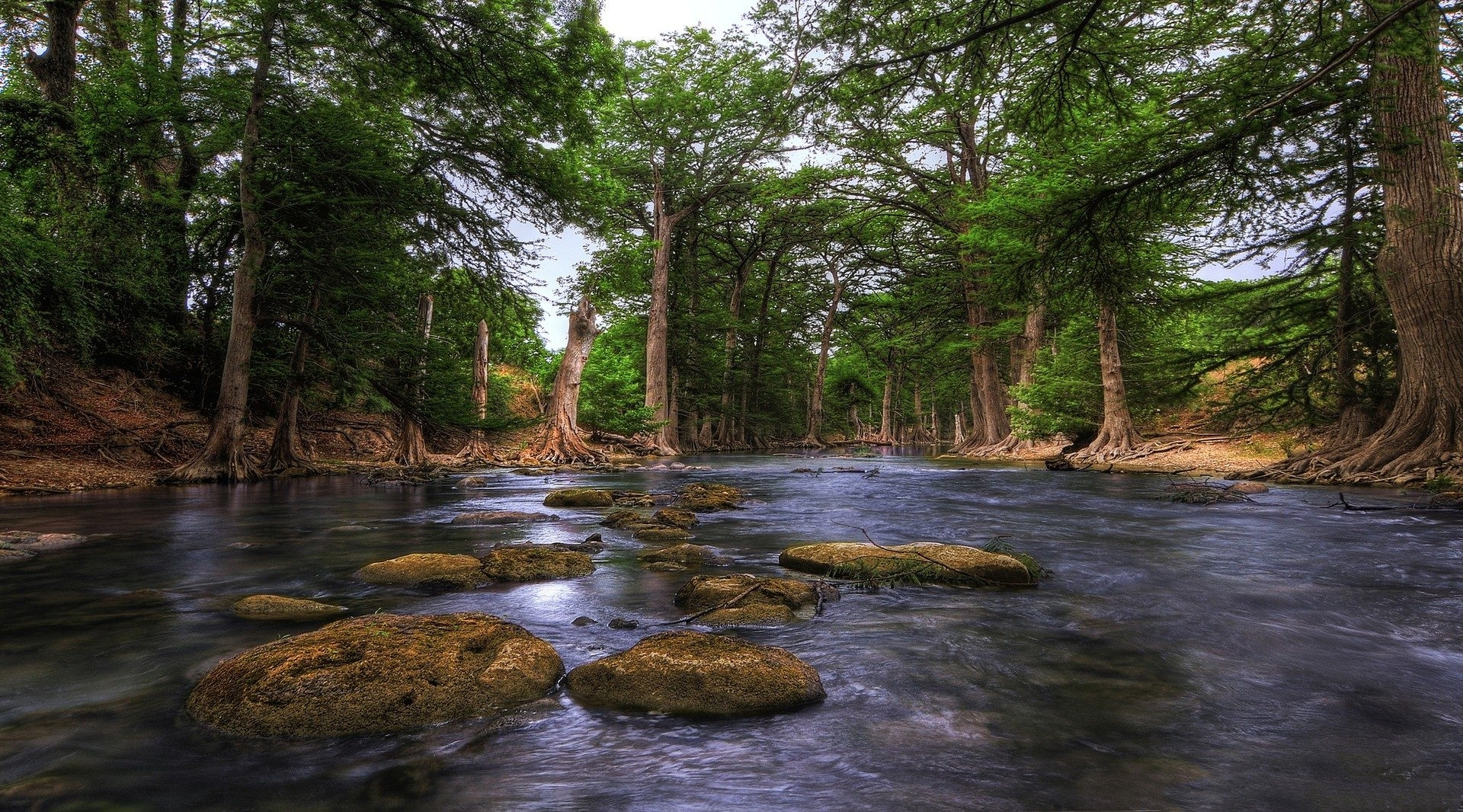 river: guadalupe river texas hill country forest trunks rocks usa