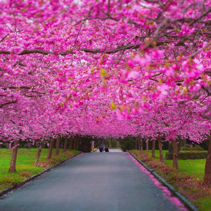 10 Best Spring Scenery Wallpaper Widescreen FULL HD 1080p For PC Background 2021 free download romantic spring e29da4 4k hd desktop wallpaper for 4k ultra hd tv e280a2 wide 800x800