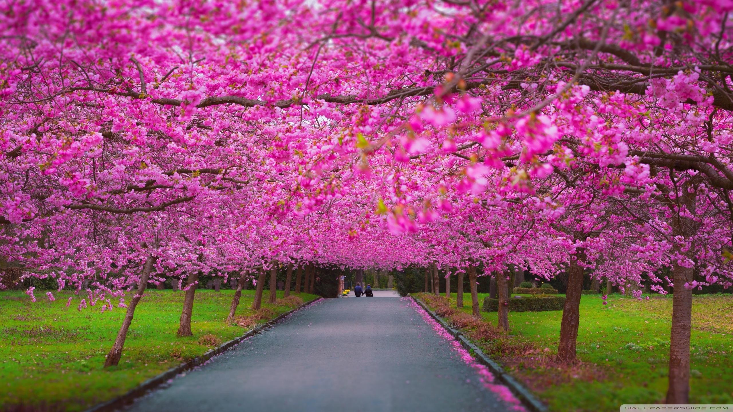 romantic spring ❤ 4k hd desktop wallpaper for 4k ultra hd tv • wide