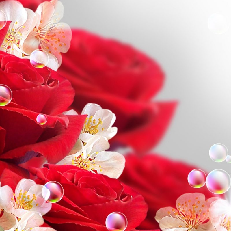 10 New Rose Wallpaper For Desktop FULL HD 1080p For PC Desktop 2020 free download rose bush of pink roses wallpaper for desktop and mobile in high 800x800