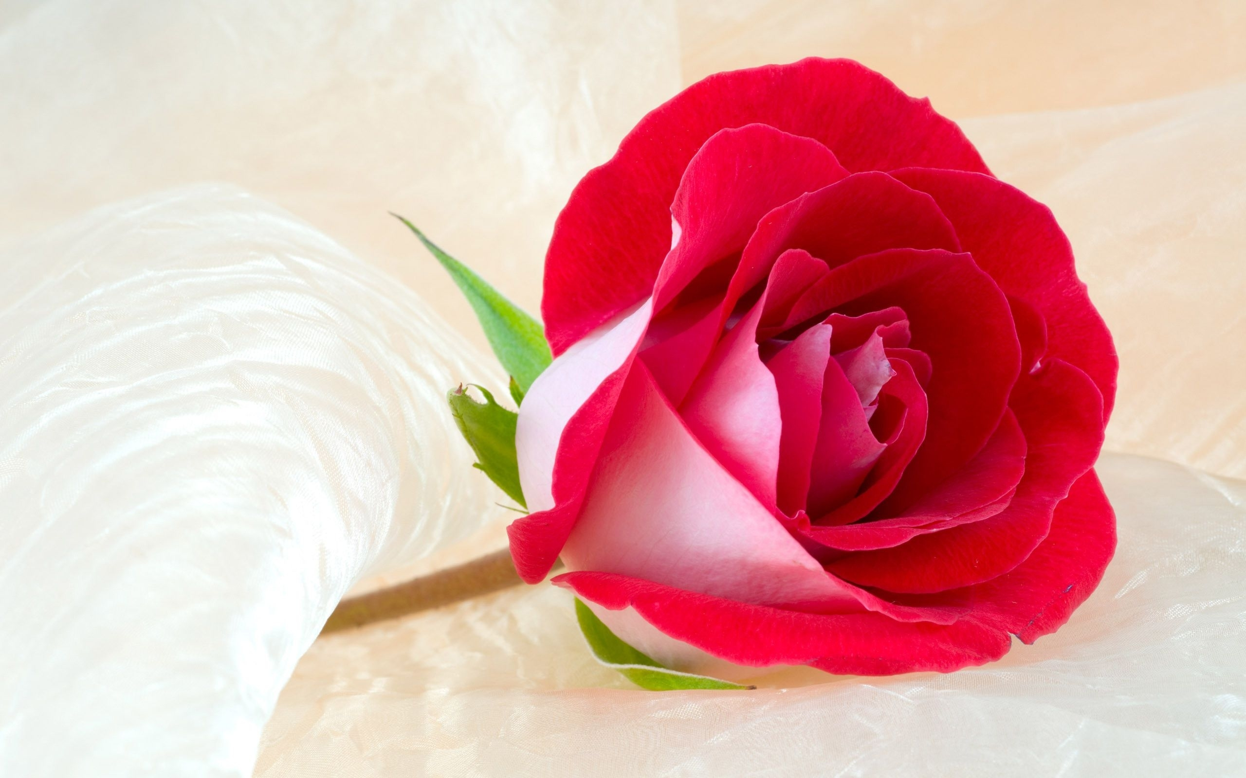 rose flowers wallpaper android apps on google play | hd wallpapers