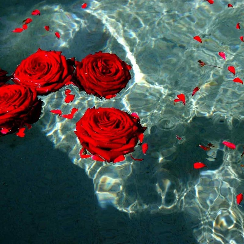 10 most popular red rose background tumblr full hd 1080p